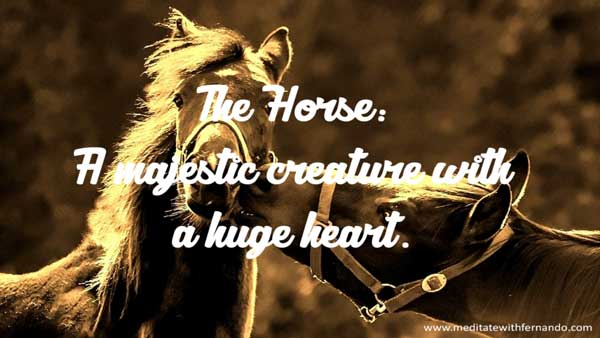 Meet a creature with empathy and feelings beyond human imagination: The Horse!